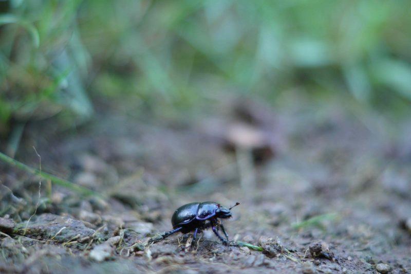 scarabb